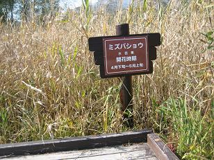 Hisato_029